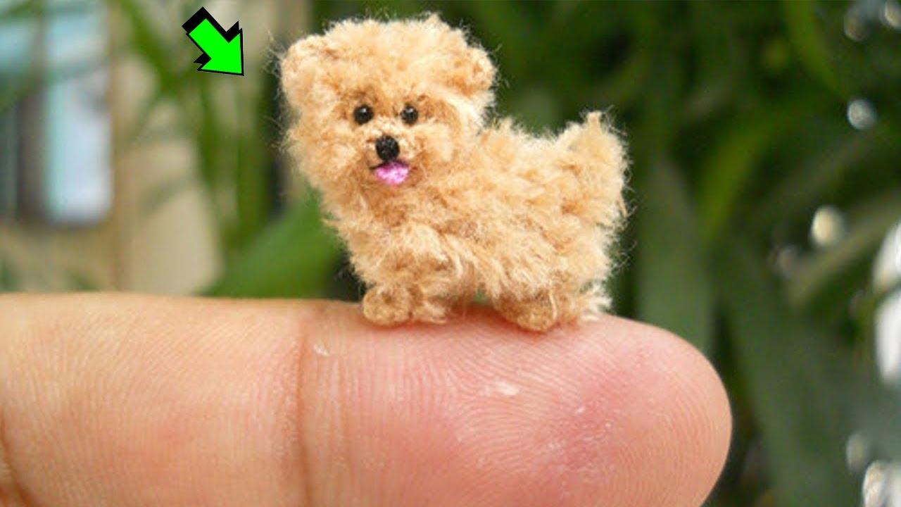 10 Razas De Perros Mas Pequeños Del Mundo Youtube