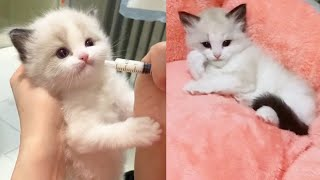 Cute Cat|Adorable Baby cats doing funny thing😂New funny kittens video Compilation