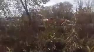 Грязная канализация течет в реку Миасс