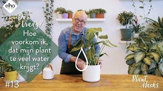 elho Plant hacks #14 water geven