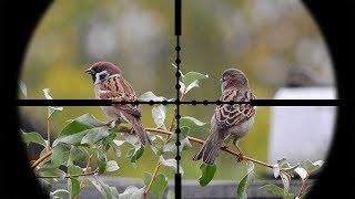 Berburu Burung Gereja
