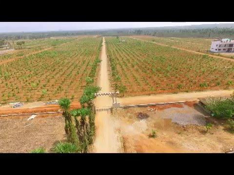 Chandan Valley Sandalwood Plantation