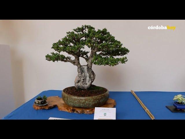 Un paseo por el mundo de los bonsáis