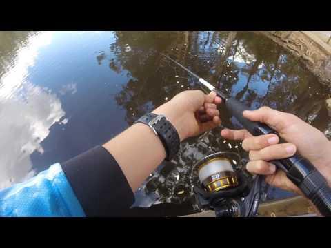 BRISBANE TILAPIA FISHING