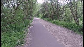 Гуляем по лесу // Велосепидист сбили собаку // Англия моими глазами