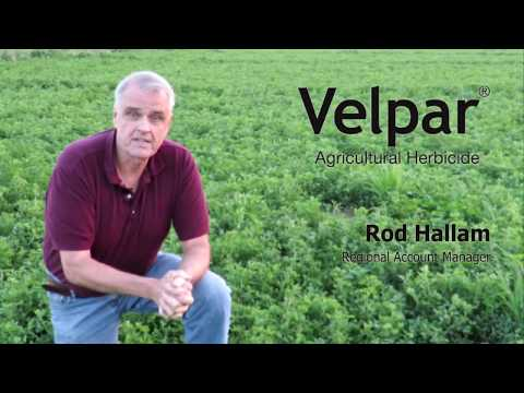 Keeping Alfalfa Weed Free With Velpar