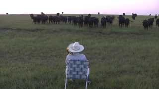 Serenading the cattle with my trombone (Lorde - Royals) thumbnail