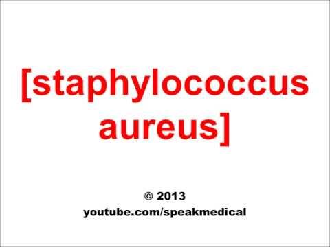 Pronounce Staphylococcus Aureus | SpeakMedical