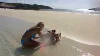 波打ち際で水遊びする、美女と子犬…じゃなかった!その正体は…