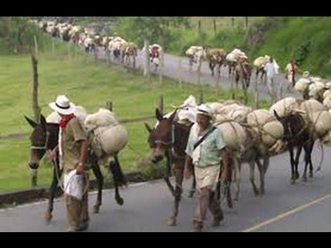Historias de Arrieros Paisas, Ciudad Bolivar Antioquia, Colombia - TvAgro por Juan Gonzalo Angel
