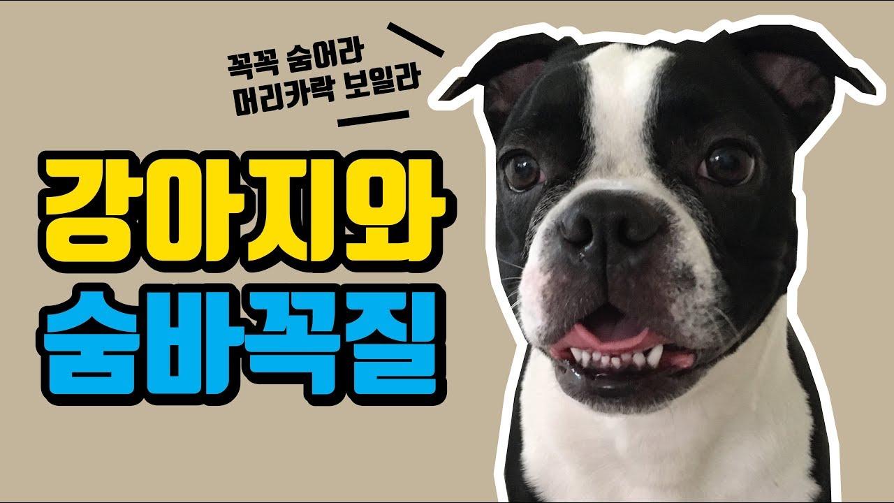 [재밌는놀이] 강아지와 집에서 숨바꼭질!
