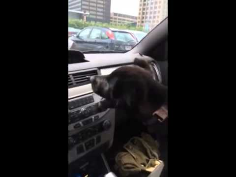 Puppy Experiences Air Conditioning for the First Time