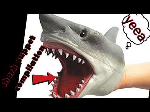 Shark puppet compilation
