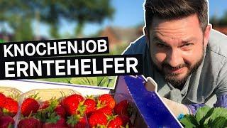 Selbstversuch: So hart ist der Job als Erntehelfer*in || PULS Reportage