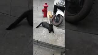 Funny cat girl friend fucked up 😅😅