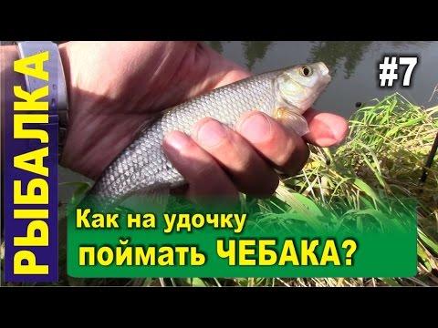Рыбалка в Сибири в тайге на реке. Ловля чебака на поплавочную удочку. Белый камень, Кара-Чумыш
