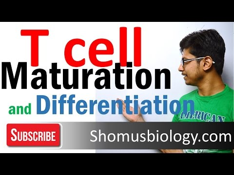 T cell maturation and differentiation - thymic selection | T cell development 2