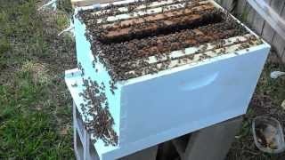 Beehive Inspection with Shannon Beekeeper Mentee