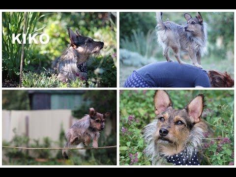DOG TRICKS BY KIKO   street dog rescued from Sardinia/ Italy   IOIONA
