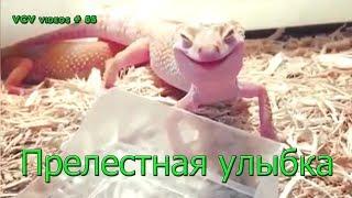 Подборка приколов за Сентябрь    ! #55 Прелестная улыбка !