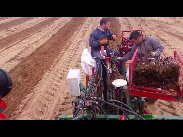 Plantação vinha 2016, plantig vineyard, planter vigne