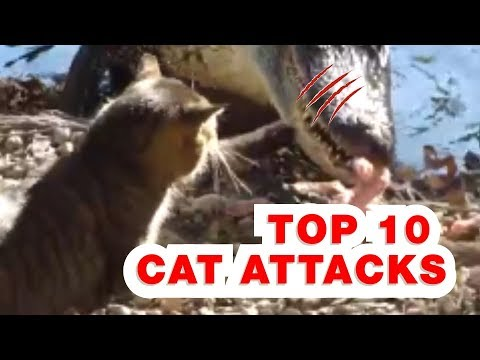 TOP 10 CAT ATTACKS OF ANOTHER ANIMALS