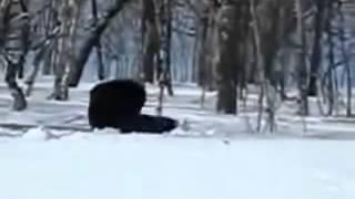 Охота на медведя   YouTube