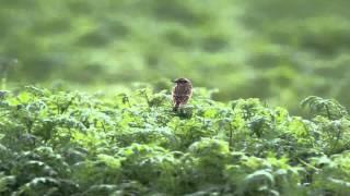 Observer les oiseaux dans nos jardins !