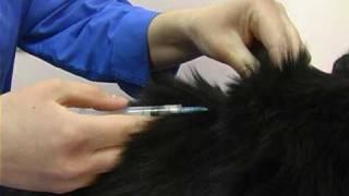 вакцинация котов . Все О Домашних Животных.