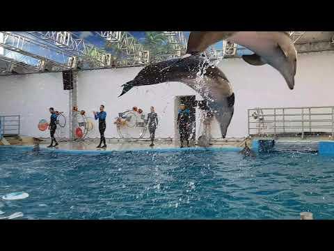 Анапа. Дельфинарий.