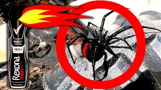 Redback Spiders On Childrens Tonka Truck Toys Major Spider Infestation thumbnail