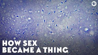 How Sex Became a Thing