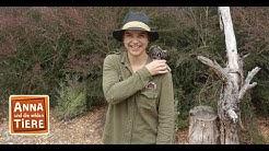 Sammy, der coole Gleitbeutler (Doku) | Reportage für Kinder | Anna und die wilden Tiere