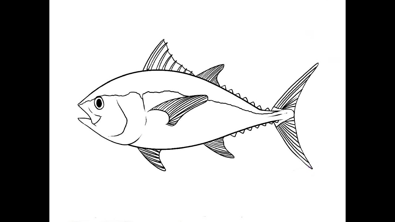 Uncategorized A Drawing Of A Fish how to draw a tuna fish youtube