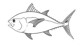How to Draw a Tuna fish / Как нарисовать тунца