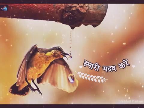 SAVE BIRDS (HINDI)