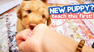 3 EASY Things You NEED to Teach Your Puppy  Any puppy can learn this!