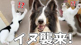 🐈犬の友達がやって来てテンションMAXになる親子猫www