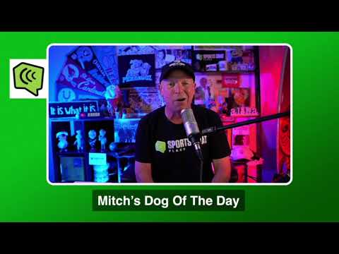 Mitch's Dog of the Day 10/24/20: Free College Football Betting Picks Predictions and Betting Tips