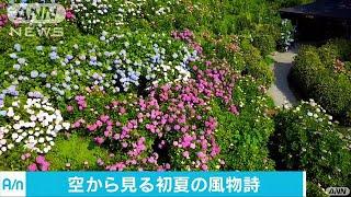 1万株超アジサイ咲き誇る ドローンで圧巻の風景を(17/07/04) thumbnail