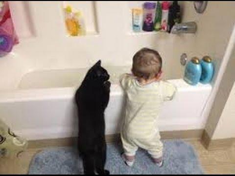 Фотогалерея - Кошки и дети - Забавные фото кошек