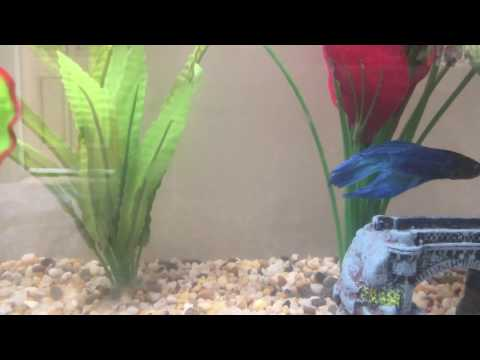 2 Signs That Your Fish Is Happy