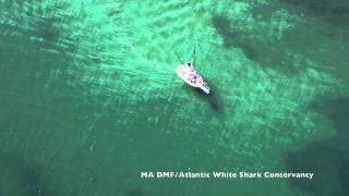 atlantic white shark research trip aug 14 2015