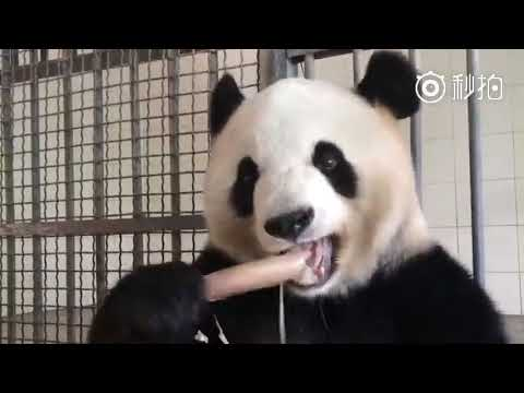 More than 4 minutes of a panda eating bamboo. You can thank us later.