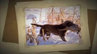 Soggy Acres Labrador Retrievers Hunting Video