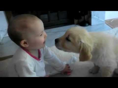 Baby And White Labrador Puppy Meet For The Very First Time Youtube
