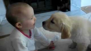 Baby And White Labrador Puppy Meet For The Very First Time
