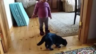 Когда в доме кошка москитная сетка не нужна
