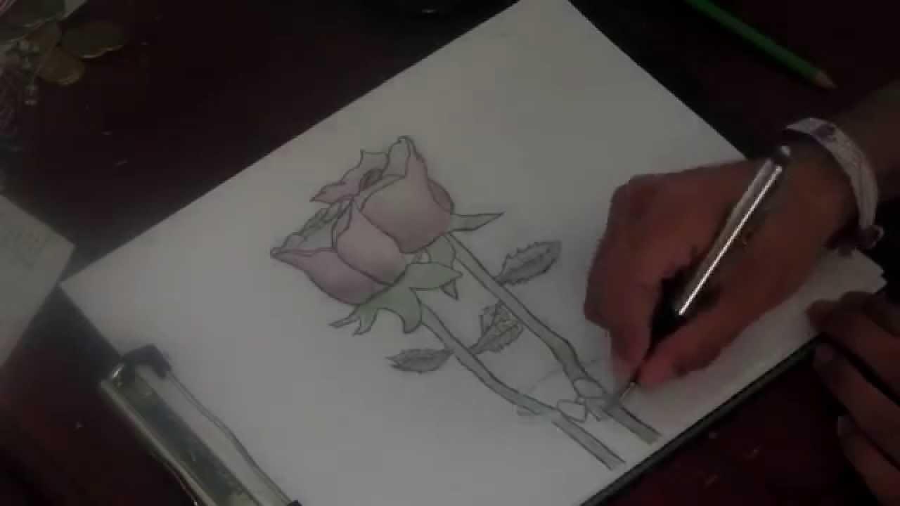 Dibujando Rosas Rojas Youtube