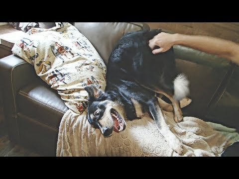 WE HAVE THE WEIRDEST DOG EVER // #RVLIVING WEEKEND VLOG